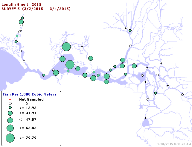Figure 3.  Longfin Smelt catch distribution in Smelt Larval Survey #5,  early March 2015.  (CDFW data summary)