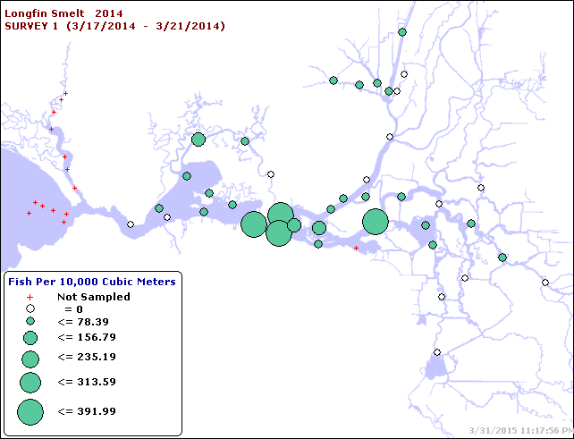 Figure 8.  Longfin Smelt catch distribution in 20-mm Survey #1,  mid March 2014.  (CDFW data summary)