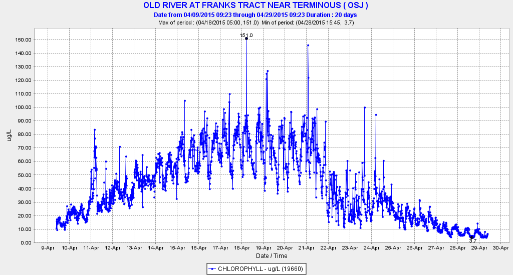 Figure 2.  Chlorophyll levels in Old River adjacent to Franks Tract in the central Delta during April 2015.  (Source: CDEC)