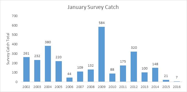 Graph of January Survey Catch