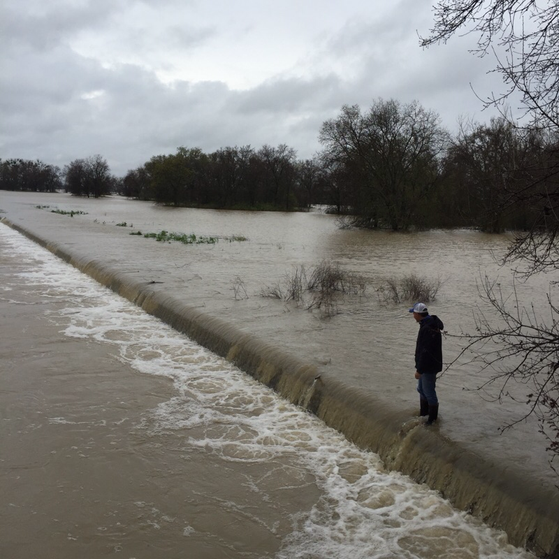 Above Photo: Fremont Weir on March 13, 2016. Overflow to Yolo Bypass was 30,000-40,000 cfs. Overflow peaked at 65,000 cfs two days later, as river stage rose to 36 ft, two feet above that in photo. For video of overflow event and Bypass flooding see http://youtu.be/9hrn2bSgg8A .