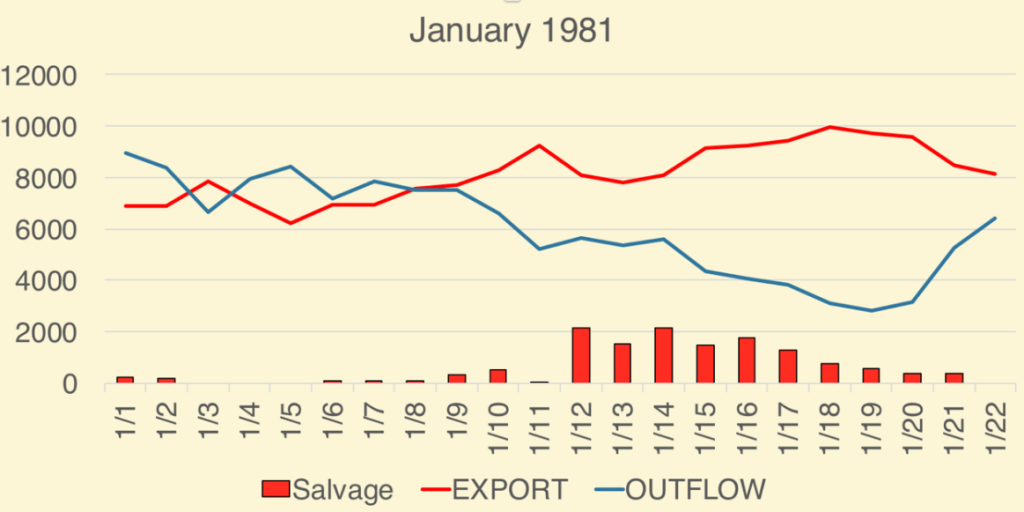 Figure 2. January salvage of adult Delta smelt at South Delta export pumps in 1981. Also shown is export rate (cfs) and Delta outflow (cfs). The maximum allowed export rate is 11,400 cfs. (Data Source: CDFW.)