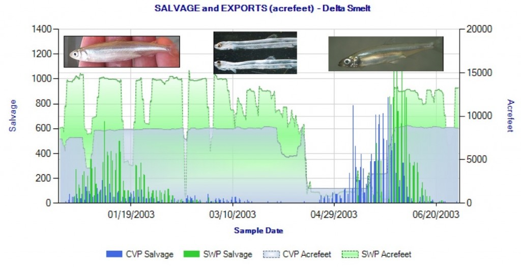 Figure 4. Winter-spring salvage of Delta smelt at south Delta export pumps in 2003. Delta smelt young begin reaching salvageable size (>20 mm) in early May. Also shown is export rate (acre-feet per day) by pumping plant. The maximum allowed export rate is 11,400 cfs (about 23,000 acre-feet per day). (Data Source: CDFW). Winter salvage is primarily adult smelt. Spring salvage is predominantly juvenile smelt (>20 mm). April entrainment of 5-15 mm larval smelt is not accounted for at salvage facilities, because they pass undetected through salvage screens.