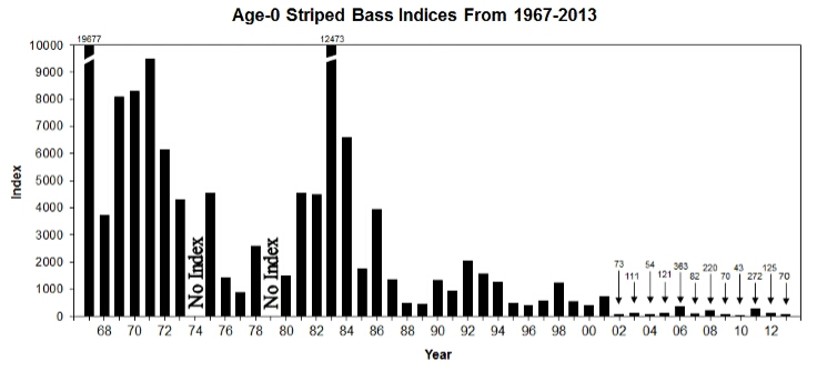 Figure 5. Striped bass fall index of young striped bass 1967-2013. Not shown are the near record low indices in 2014 and 2015 (59 and 52, respectively).