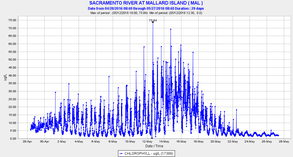 Graph of Chlorophyll concentration April 28-May 27, 2016 in eastern Suisun Bay at Chipps Island near Pittsburg, CA