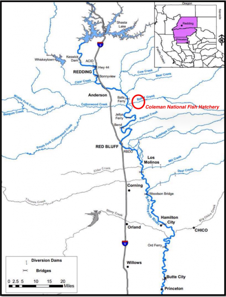 Coleman National Fish Hatchery Map