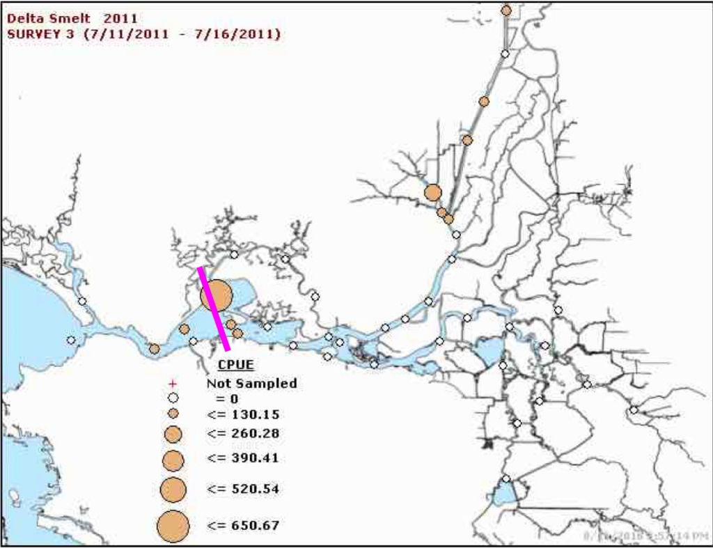 Figure 7. Concentrations of Delta smelt in the Summer Townet Survey July 2011. Magenta line is location of X2.