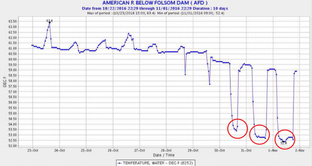 Figure 2. Temperature of the water released from Folsom Dam Oct 21 – Nov 2, 2016. Red circles show the release of water from Folsom's cold-water pool.