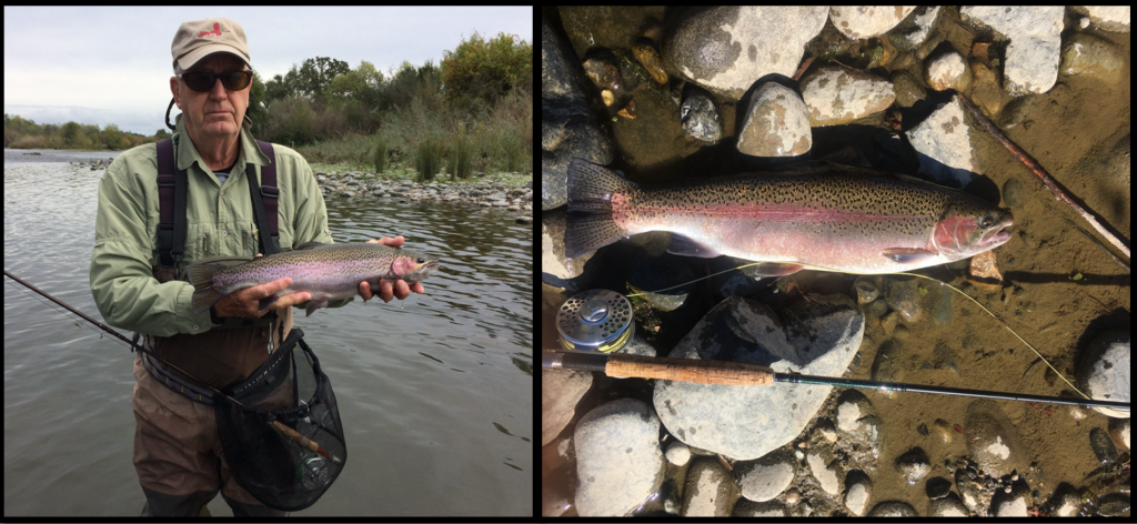 Are these American River fish steelhead from the Battle Creek Hatchery?