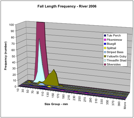 Figure 3. Numbers of fish collected in the fall of 2006 along San Joaquin River shoreline near Antioch by species and size. Note the extreme abundance of silversides, followed by threadfin shad and yellowfin goby. Note the very low numbers of striped bass.