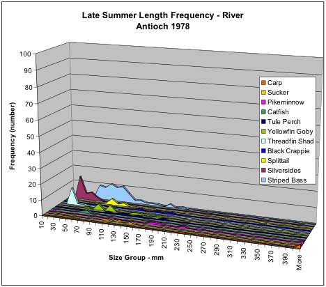 Figure 4. Numbers of fish collected in late summer 1978 along San Joaquin River shoreline near Antioch by species and size. Note the relatively high numbers of striped bass relative to silversides and threadfin shad.