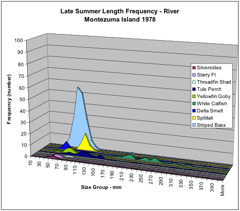 Figure 5. Numbers of fish collected in late summer 1978 in Sacramento River shoreline near Montezuma Island (adjacent to Collinsville) by species and size. Note the high relative abundance of striped bass young. Delta smelt were actually more abundant than silversides, yellowfin goby, or threadfin shad.