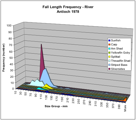 Figure 6. Numbers of fish collected in fall 1978 in San Joaquin River shoreline near Antioch by species and size. Note silversides were relatively abundant along with striped bass and threadfin shad.