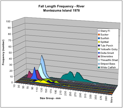 Figure 7. Numbers of fish collected in fall 1978 in Sacramento River shoreline near Montezuma by species and size.