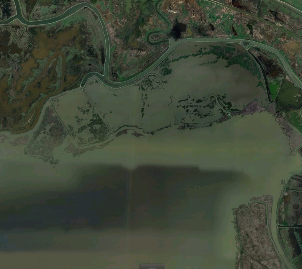 Figure 2. Flooded Wheeler Island on north shore of Honker Bay. Island levees breached in 2005 and have been marginally repaired. Without active management such sites may become permanently breached and actively eroded. See Figure 1 for location. (Source: GoogleEarth)