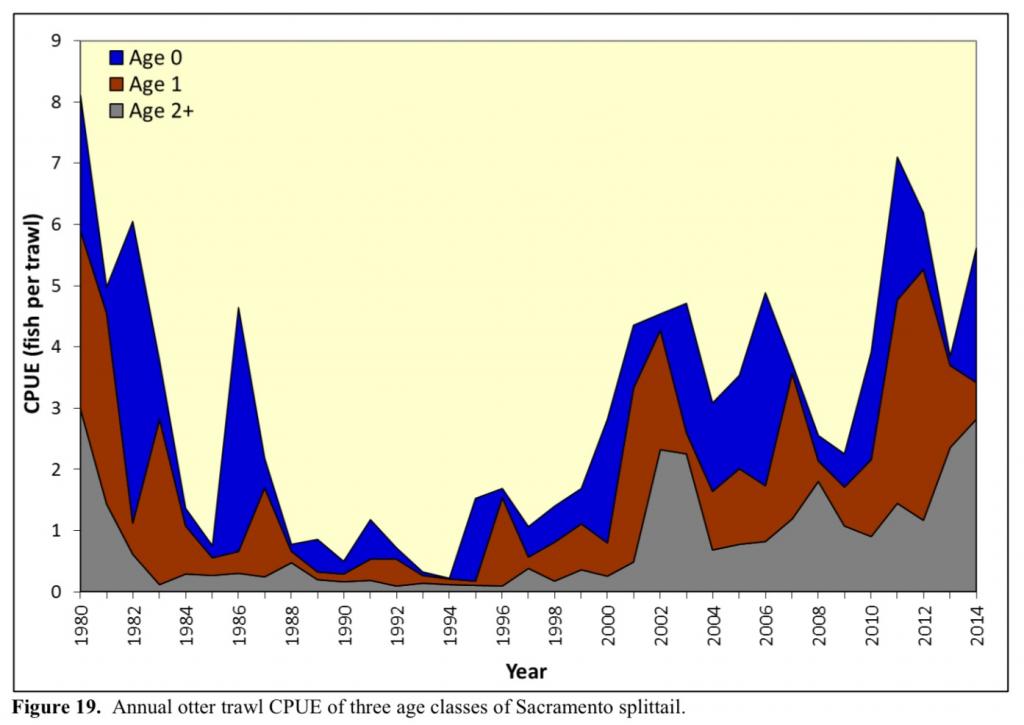 Figure 1. Catch-per-unit-effort of Sacramento splittail in Suisun Marsh 1980-2014 by age group. (Source: Teejay O'Rear, UC Davis)