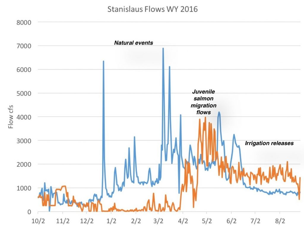 Figure 3. Spring snowmelt (natural flow – blue line) is retained in New Melones Reservoir except for prescribed irrigation releases and salmon migration flows (orange line – reservoir releases to lower Stanislaus River). (CDEC data)