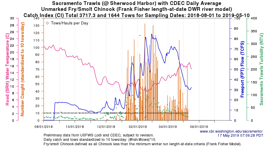 Figure 4. Trawl catch of juvenile salmon at Sacramento (river mile 50) winter-spring 2019. Note high flow of 30,000 cfs in early May from major contributions from Feather-Yuba and American rivers.